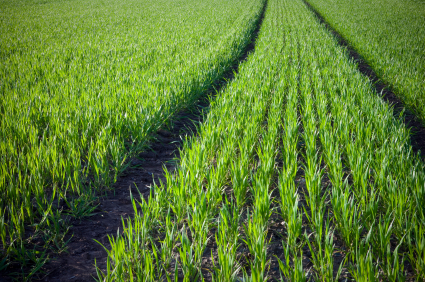 Rich organic soil is important for growing superfoods